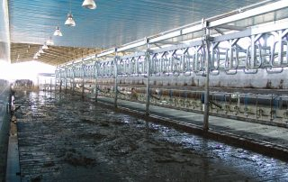 DAIRY FARM WITH 3000 MILKING COWS - Nolan UK Projects