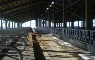 DAIRY FARM WITH 2000 MILKING COWS - Nolan UK Projects