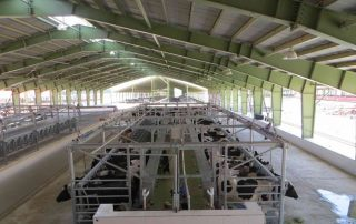 DAIRY FARM WITH 2500 MILKING COWS - Nolan UK Projects