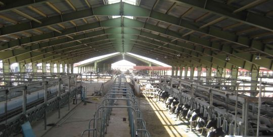 DAIRY FARMING WITH 3000 MILKING COWS - Nolan UK Projects